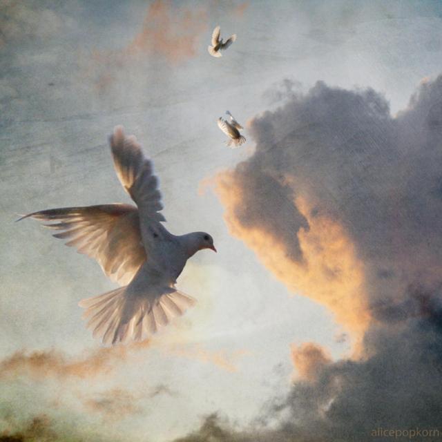 peace-dove-4